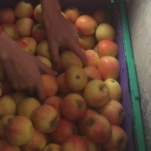 Herbstzeit – Apfelmostzeit